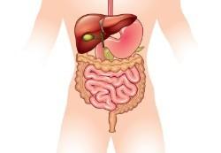 Польза и вред цикория растворимого для здоровья: для женщин, мужчин, состав, норма, инулин