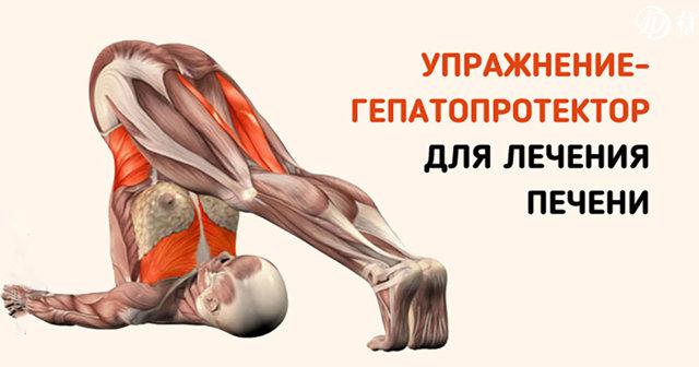 Упражнения для печени и поджелудочной