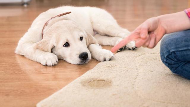 Что сделать, если собаку рвет белой или желтой пеной