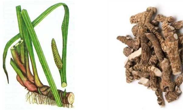 Корень аира от грибка ногтей - отзывы, рецепты для лечения