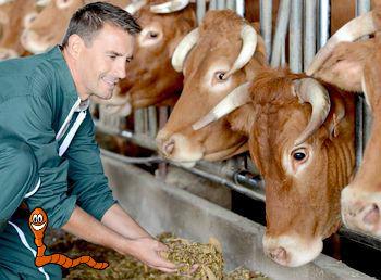 Цепень у человека бычий и свиной - симптомы и лечение