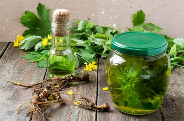 Чистотел – применение, лечебные свойства, противопоказания