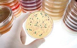 Как восстановить микрофлору кишечника после приема антибиотиков - самые эффективные способы восстановления