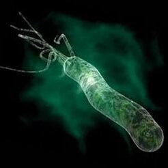 Хеликобактериоз у детей: симптомы, причины, лечение, профилактика, осложнения