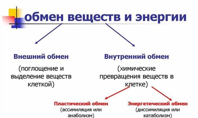 АКТОВЕГИН И МЕКСИДОЛ: можно ли принимать одновременно (совместимость)