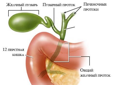 Холецистит панкреатит хронический - лечение панкреатита и холецистита лекарствами совместное заболевание чем и как лечить дома диета