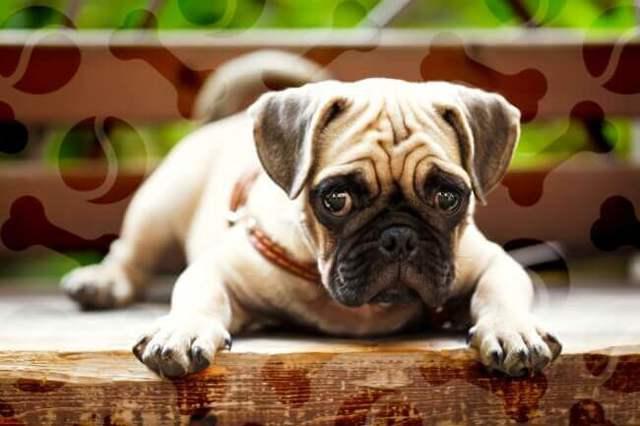 Панкреатит у собак – симптомы и лечение воспаления поджелудочной железы 2020