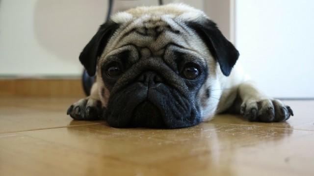 Рвота у собаки, причины рвоты, как лечить
