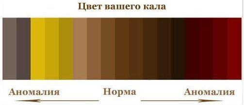 Светлый кал – причины изменения цвета кала на белый или серый