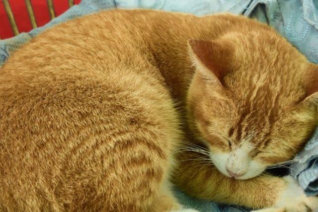 Пирантел для кошек: дозировка, инструкция
