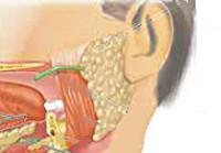 Невралгия ушного узла: причины, диагностика, лечение