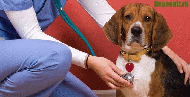 Энтерит у собак - острый, вирусный и другие виды, симптомы и лечение, профилактика