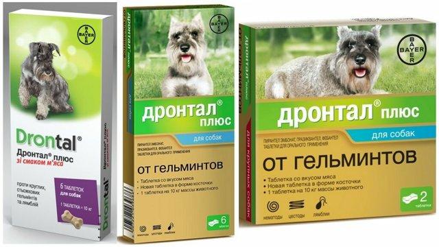 Дронтал для кошек: инструкция по применению, дозировка для котят и взрослых питомцев