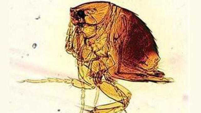 Паразиты в организме человека: фото, лечение
